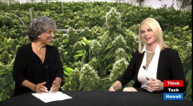 Cannabis-Chronicles-Medical-Cannabis-Cannabis-Chronicles-attachment