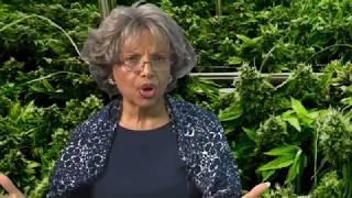 The-Hemp-Industry-in-Hawaii-Cannabis-Chronicles-attachment