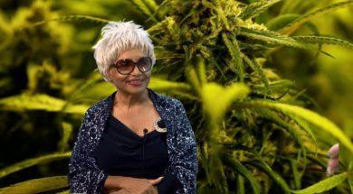 Legalization-and-Decriminalization-Cannabis-Chronicles-attachment